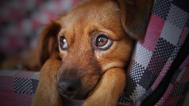 Kdo by neodolal psím očím
