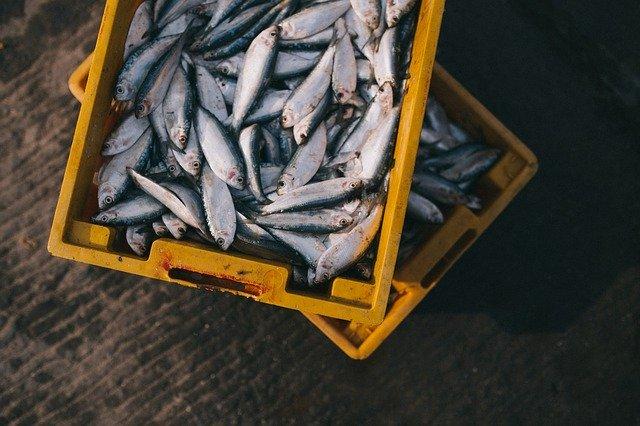 bedna s rybami