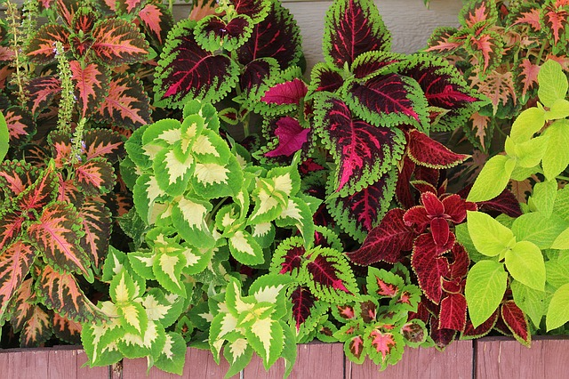 Barevné rostliny